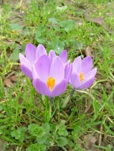 saffron-1353745-639x848